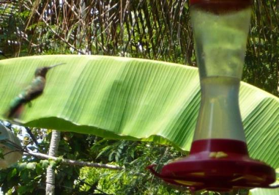 The Lily Pond House Hotel: Watching hummingbirds on the porch