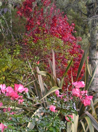 Stratford, New Zealand: Garden in Autumn