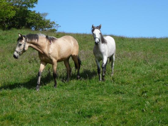 Buttermilk Lodge Guesthouse: Yearlings, Amber and Ruby.