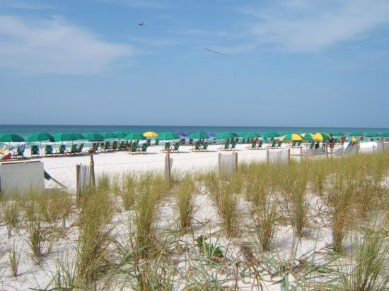 Edgewater Beach Condominium: Employees set up the umbrellas on the beach for you