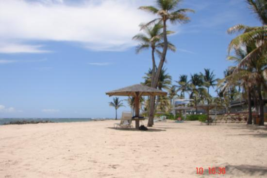 Nisbet Plantation Beach Club : beach view