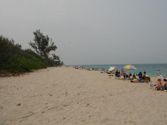 Red Reef Park : Red Reef Beach