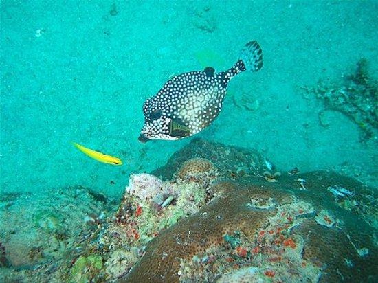 Private Diving: The Antilla