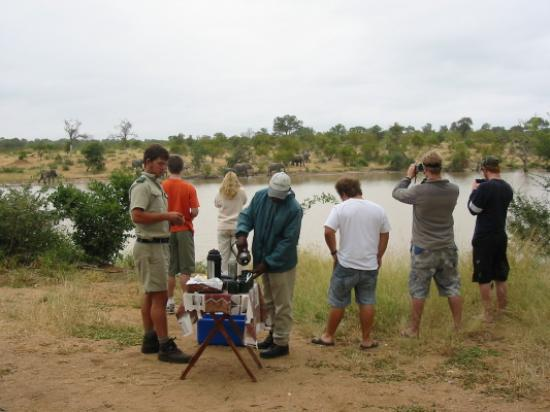 Gomo Gomo Game Lodge: Morning tea watching elephants