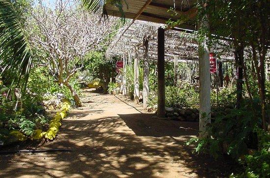Den Paradera - Dinah's Botanic & Historic Garden: Den Paradera Herb Garden