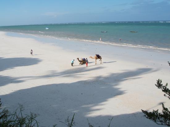 Baobab Beach Resort & Spa: Camels on Diani Beach