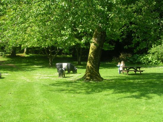 Threave Gardens, Castle Douglas, Dumfries and Galloway, and the famous Galloway Belties!