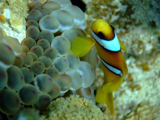Hyatt Regency Sharm El Sheikh Resort: Taken on the house reef