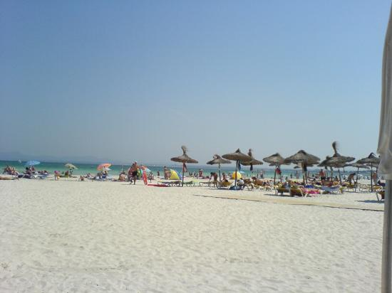 Sol de Alcudia Apartments: alcudia beach
