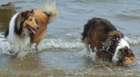Labrador Landing: playing in the