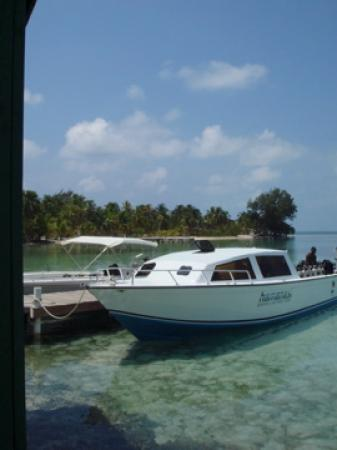 Hamanasi Adventure and Dive Resort: During our surface interval at Saltwater Caye (snorklers also go here)