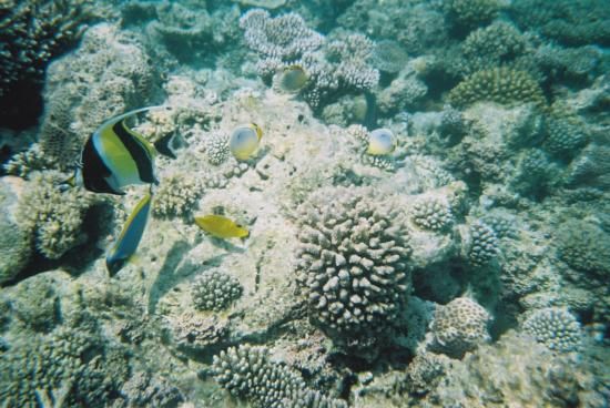 Mirihi Island Resort : Underwater Camera shot of sealife (single use camera)