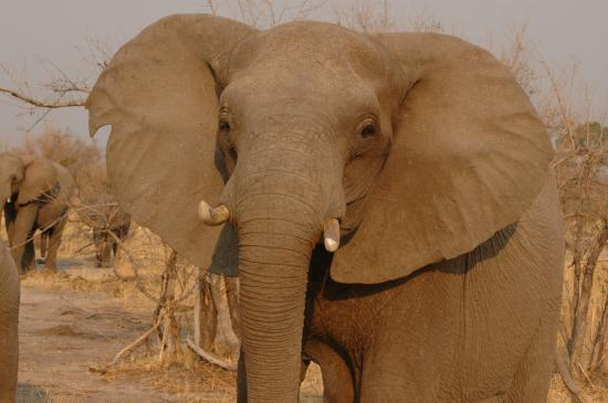 The Hide: Close-up Elephant