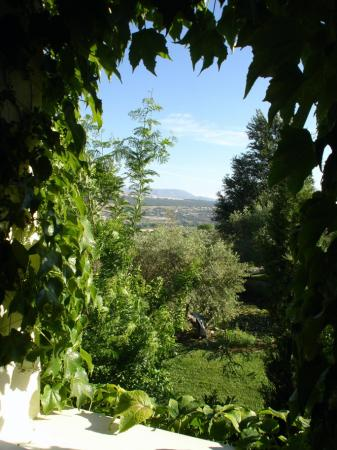 Hotel La Fuente De La Higuera: View from window
