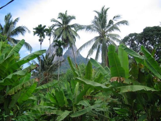 Minang Cove Resort: Hiking through the jungle
