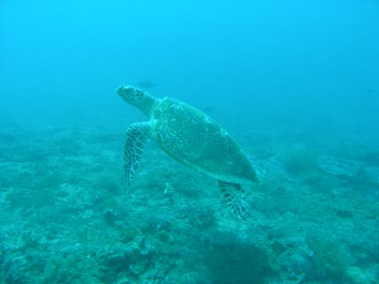 Baobab Beach Resort & Spa: turtle
