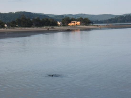 Siletz Bay Lodge: The view at 7a.m. from our balcony - sea lions/eagles!