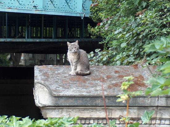 Cimetière de Montmartre : One of the many living residents of Montmartre Cemetery!