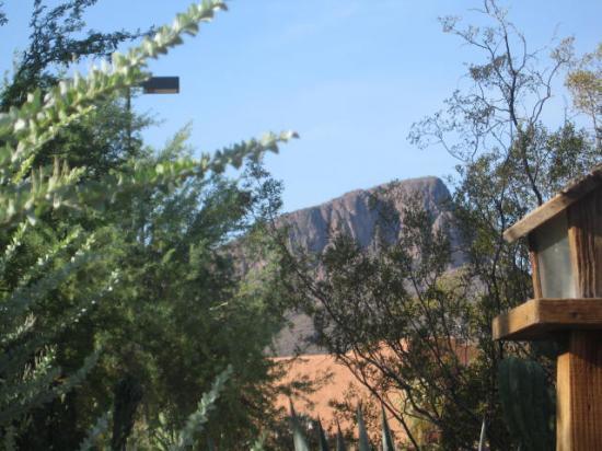 White Stallion Ranch: cactus and mountains