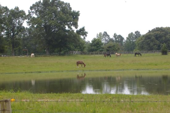 Bismarck, AR: More of the ranch