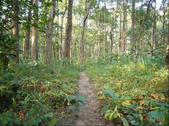 Chitwan Jungle Lodge: Jungle Trek walk