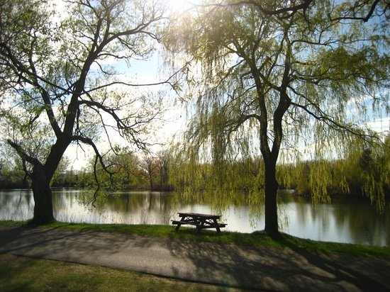Parc des Îles de Toronto : Great spot for a bbq!