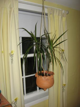 Yarmouth Port, Массачусетс: Hanging Plant in the Sea Breeze Room