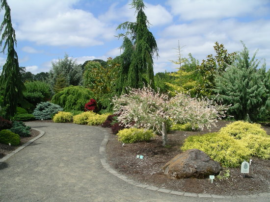 Silverton, Oregón: Conifer collection at the Oregon Garden