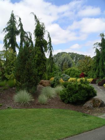 Oregon Garden: More of the conifer collection