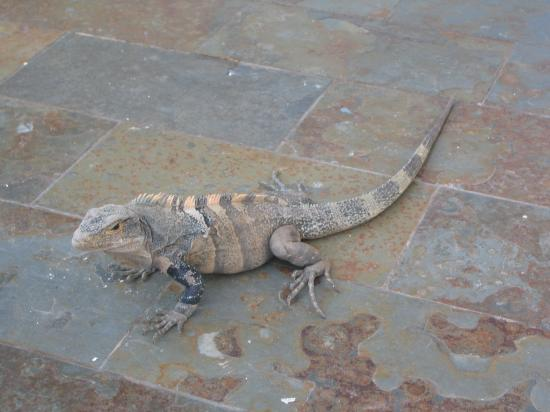 Gaia Hotel & Reserve: We named him Wally (he was good at catching butterfly's)