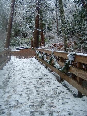 Parque Lithia: Lithia Park winter