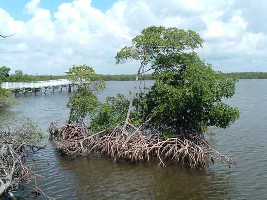 Anne Kolb Nature Center: Mangroves in the water