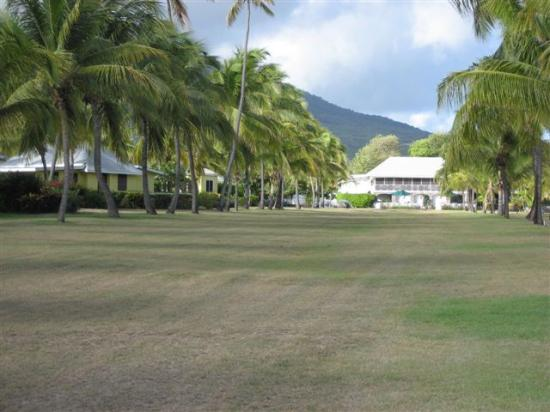 Nisbet Plantation Beach Club: Avenue of Palms