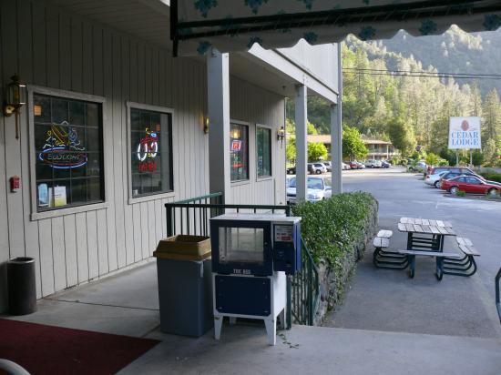Yosemite Cedar Lodge: Vue depuis le bar