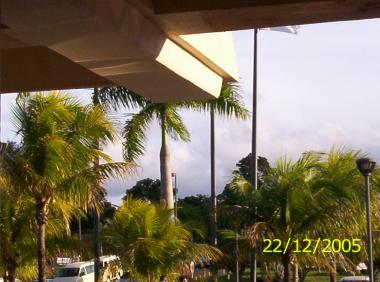 This is a picture taken from inside the airport there looking out at the palm trees