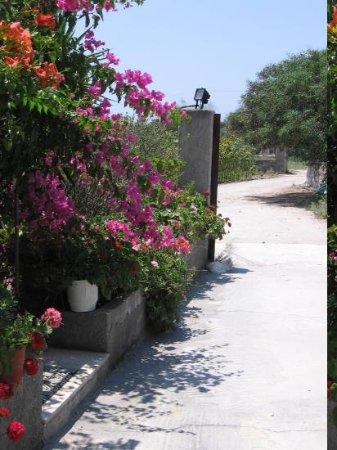 Pension Ioanna: Garden