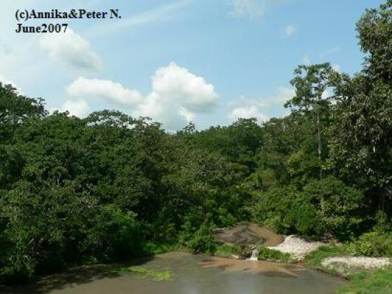 Shimba Rainforest Lodge: View from the lodge
