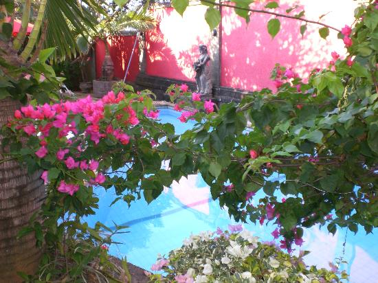 Ellie's: pool and pretty flowers