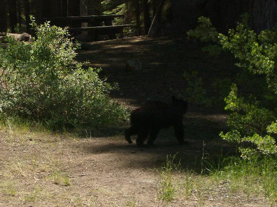 Stony Creek Campground: The bear