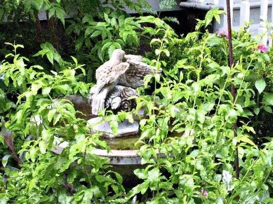 A Yellow Rose Bed and Breakfast: Bird bath - Beware of bird poop when walking around the streets too