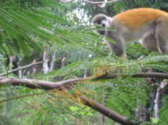 Issimo Suites Boutique Hotel and Spa: Titi Monkey