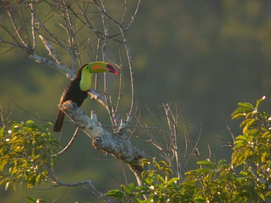 San Ignacio, Belize: Biridng in Belize