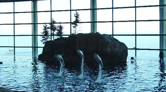 how to get to shedd aquarium