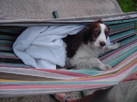 Tierra Linda Bed and Breakfast: Belle enjoying one of TierraLinda's hammocks