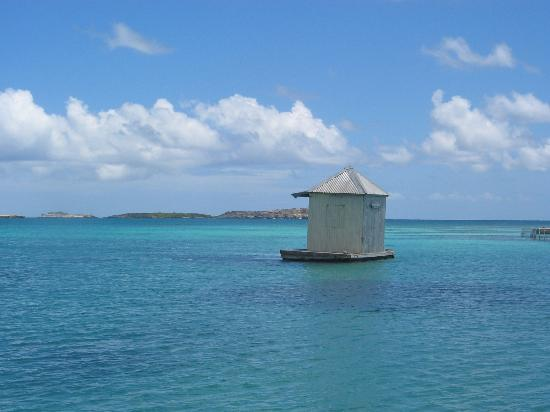 Antigua: Stingray City
