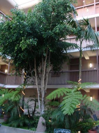 BEST WESTERN PLUS Thousand Oaks Inn: patio