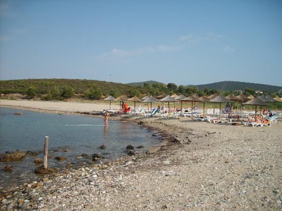 Metamorfosi Bungalows: Strand: Wasser ist sauber, Seegras