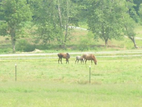 Lake Lure, NC: Horses in field