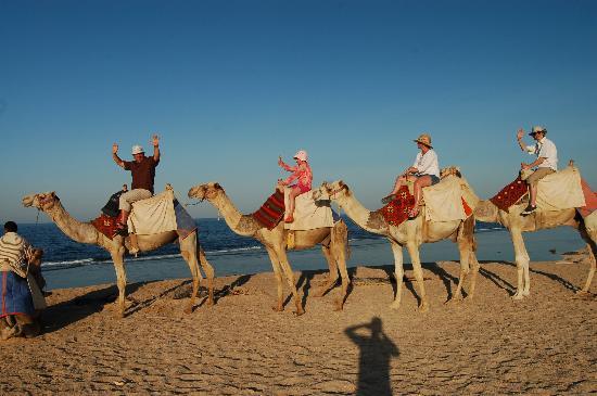 Akassia Swiss Resort El Quseir: camel trek