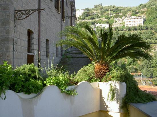 Coltur Suites: Terrace